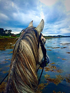 Beach riding sligo